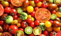 Cómo plantar tomates en botellas en tu hogar